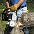 kácení stromu